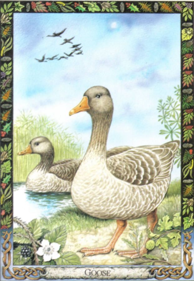 Birds Lenormand Card Meaning And
