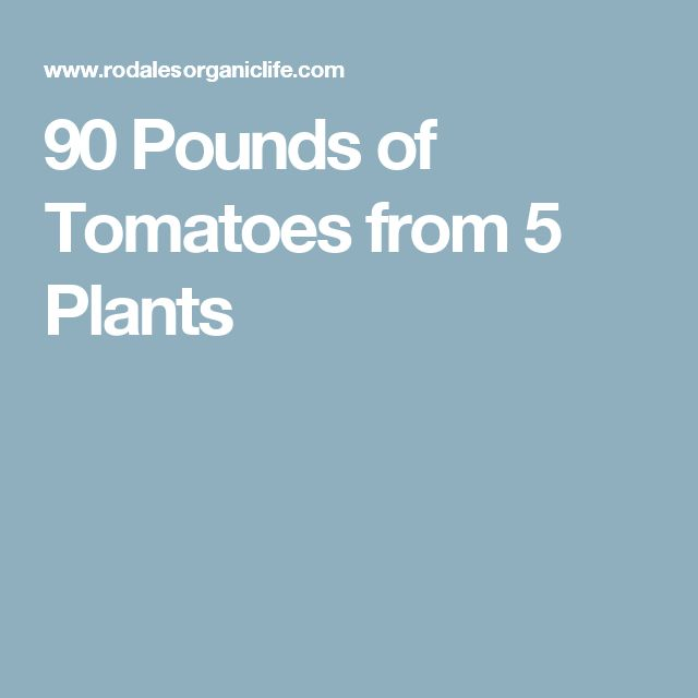90 Pounds of Tomatoes from 5 Plants