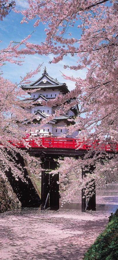 Imponente castelo de Hirosaki fotografado entre árvores de cerejeiras na província de Aomori - Japão (Festival das Cerejeiras 2016)