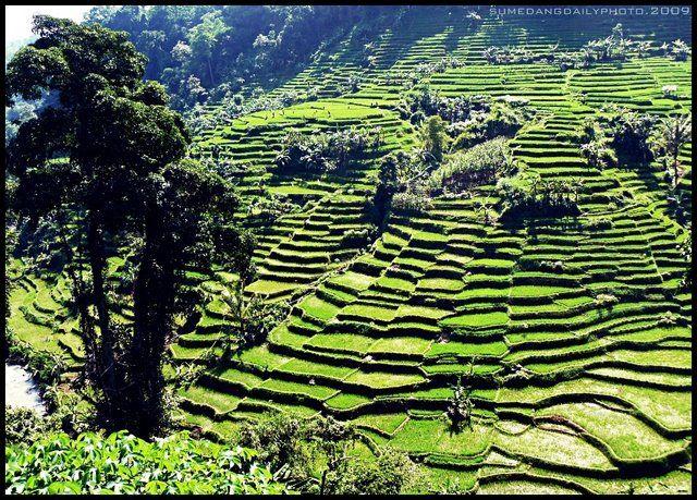 Beautiful Paddy Fields Scenery at Cadas Pangeran, Sumedang | West Java - Indonesia    Courtesy: Sumedang Photo Daily