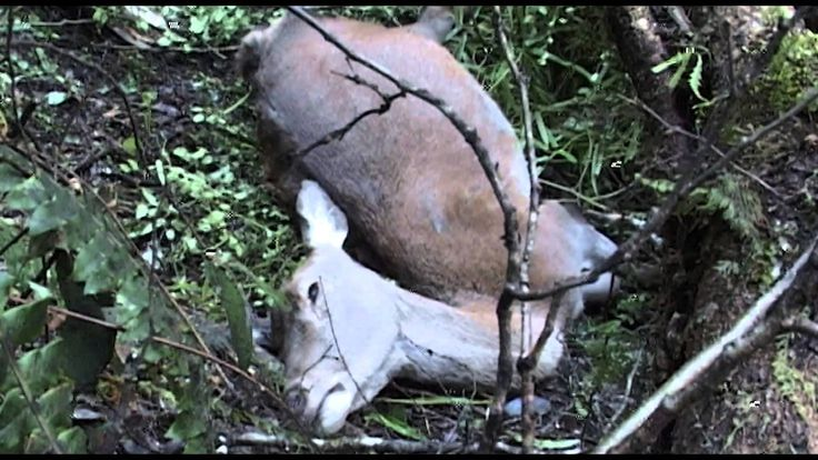 How is something that takes 4-8 days to kill animals, leaving them suffering for around 144 hours while they are writhing in pain. The worst thing is that it has a second hand poisoning rate of 6 animals! SAY NO TO 1080, BAN THE POISON, KEEP NZ CLEAN AND GREEN!