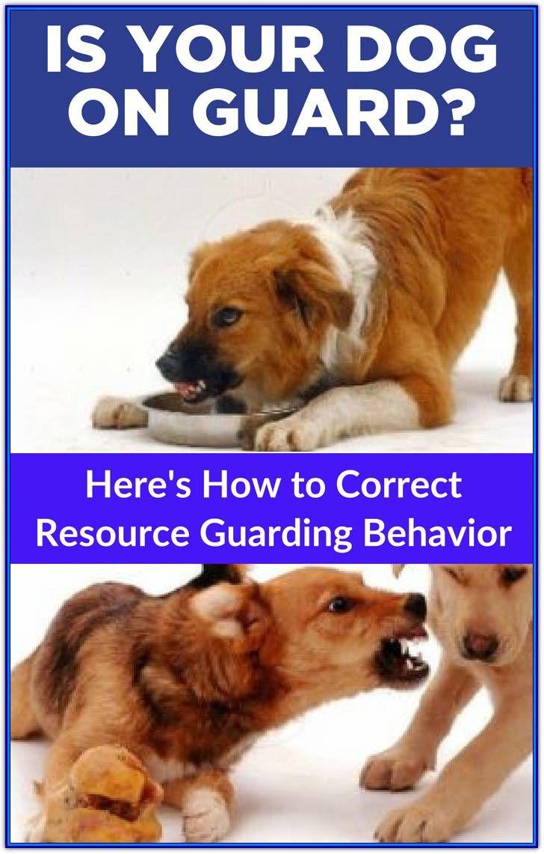 New To Aggressive Dog Training Consider This Advice Training