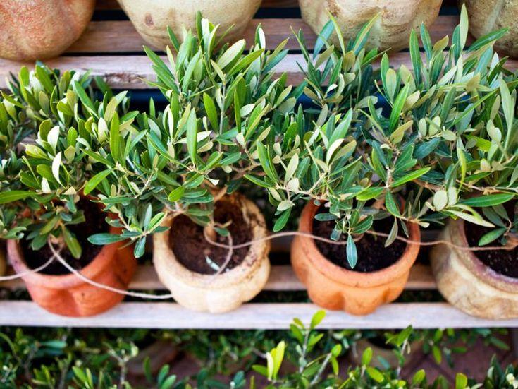 Planter et entretenir un ananas: tuto pas à pas   Ananas