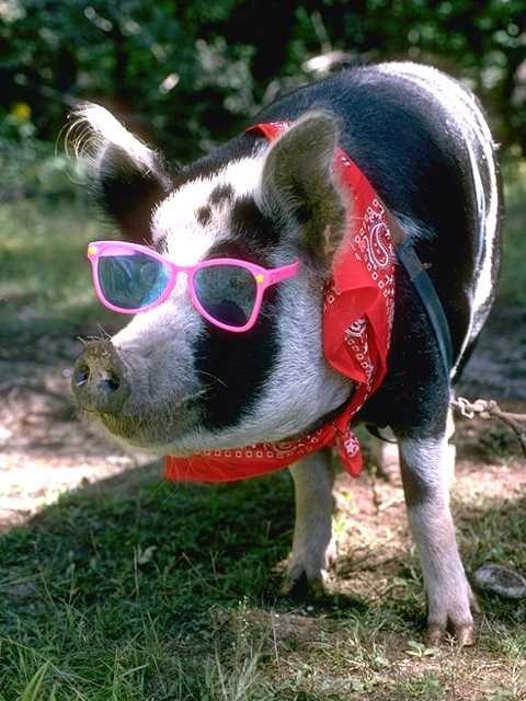 Hot miss piggy - 3 7