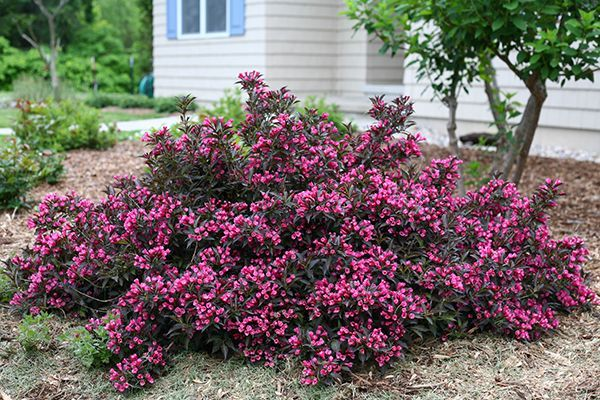 37 best plants for specific purposes images on pinterest for Low growing plants for landscaping