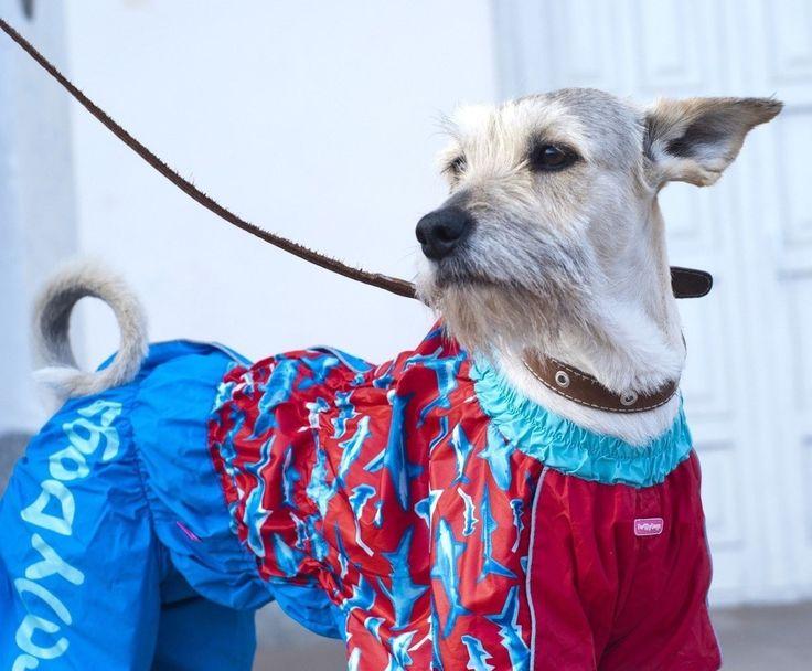 Шьем для домашних питомцев самые разные предметы своими руками. Это может быть платье, комбинезон для собаки, любимая игрушка или коврик для еды. Нельзя не упомянуть и про переноску для кошек и собак. И все это сшито своими руками. И еще посты про братьев наших меньших Одежка для маленьких собачек. Выкройки Идеи. Домик для кошки Переноска …
