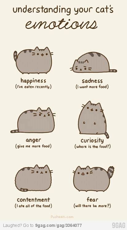Emotions of a Cat: Understands, Laughing, Cat Emotional, Food, Fat Cat, Funny, Humor, Pusheen, Animal