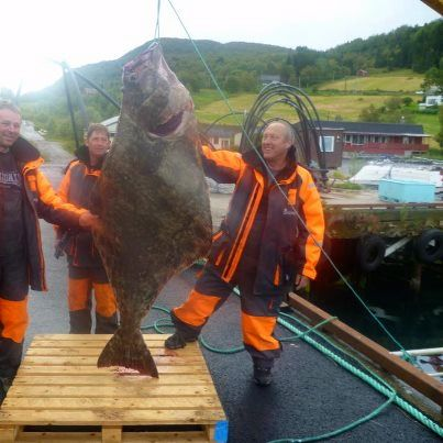 Looking forward to the next fishing trip with Norway Fishing Adventures  check out the website for some fantastic pictures www.norwayfishing.co.uk