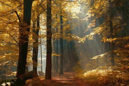 Hoy en día se conservan pocos restos inalterados de estos bosques, pues la mayoría de las  regiones por donde se extendían han estado densam...