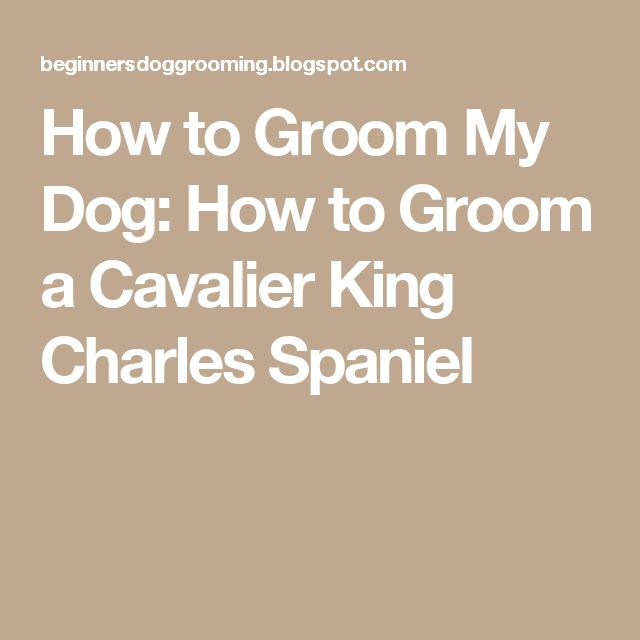How to Groom My Dog: How to Groom a Cavalier King Charles Spaniel