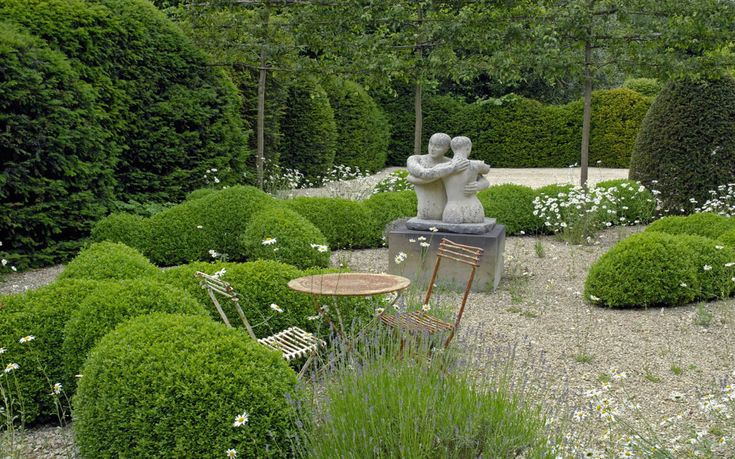 Oxeye daisies float above the line of the hedges and in between the sculptural, clipped topiary shapes - Arne Maynard Garden Design