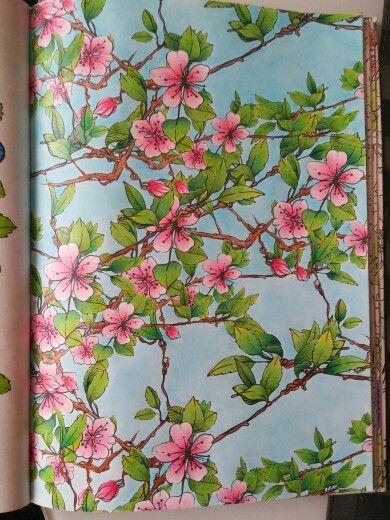 Cherry blossom, wiśnia japońska, Niezwykły Zielnik Claudia