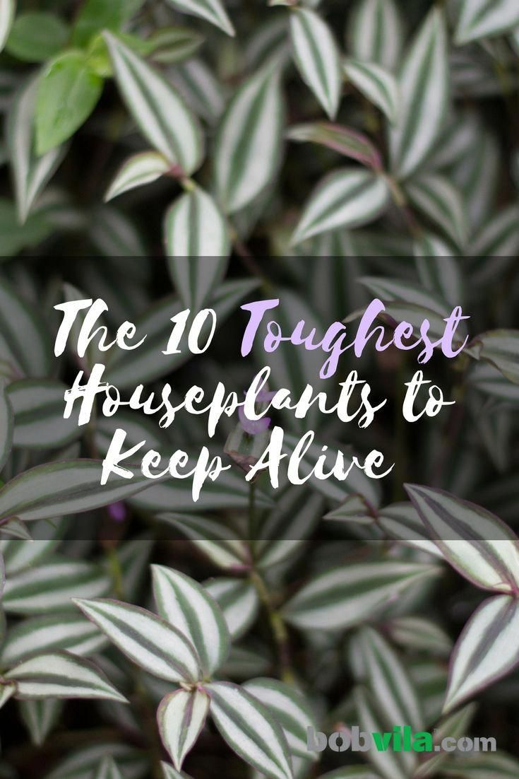 It's Not Me, It's You: The 10 Toughest Houseplants to Keep