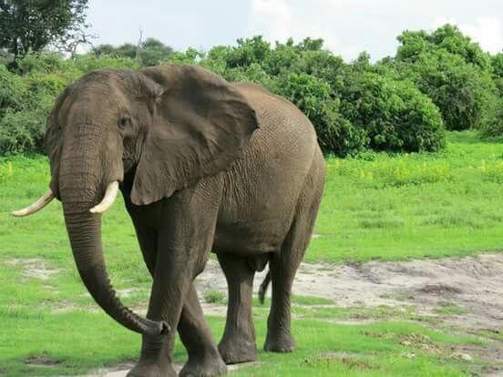 Amazing Elephant sighting.