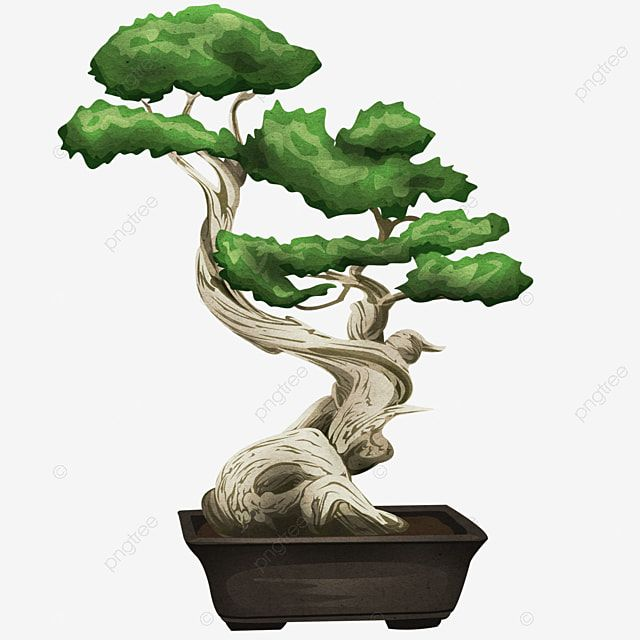 Potted Bonsai Tree Tree Trimmed Clipped Png Transparent Clipart Image And Psd File For Free Download In 2021 Bonsai Tree Bonsai Tree Clipart