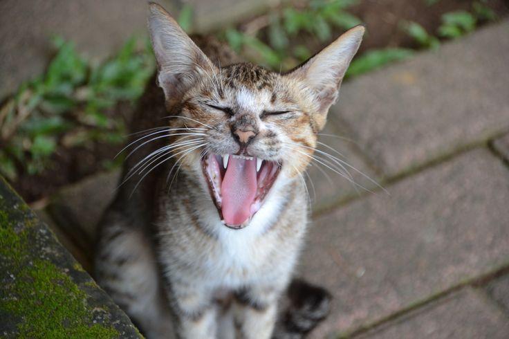 Happy puss in Bali