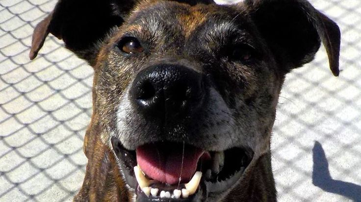 Dog pound in Stark County reaches capacity – fox8.com