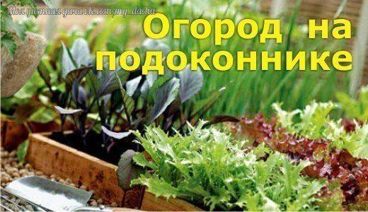 В этом обсуждении вы можете поговорить о том что и как можно выращивать у себя на подоконнике кроме цветов . Укроп, петрушка, базилик, лук, чеснок и много другое , даже огурцы и помидоры .Так что дерзайте, расскажите что вы выращиваете и как. Новички, спр