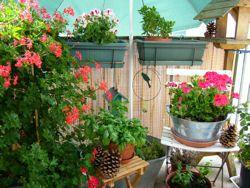 25 best ideas about calendrier du jardinier on pinterest for Calendrier plantation jardin potager