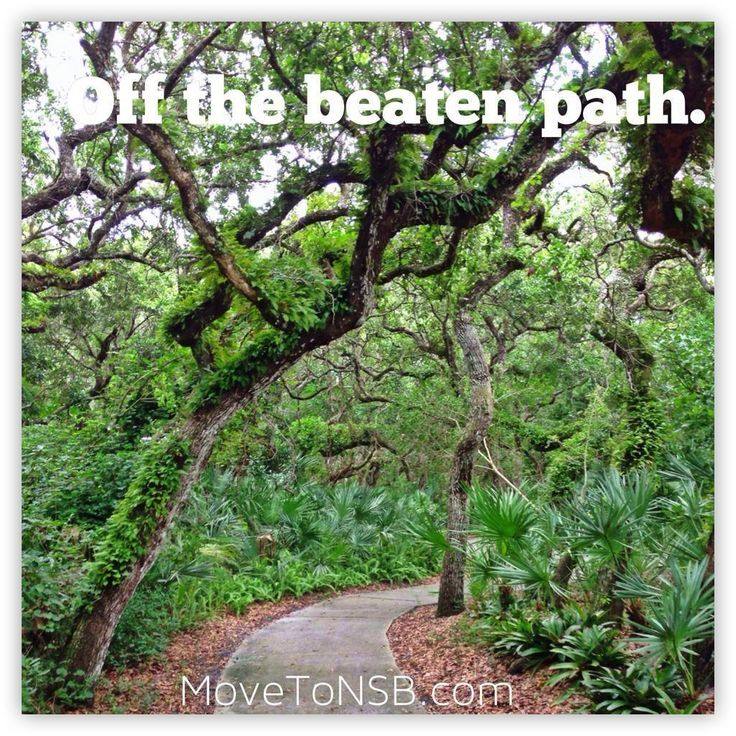 Gorgeous walking path in Sea Woods - New Smyrna Beach, Florida