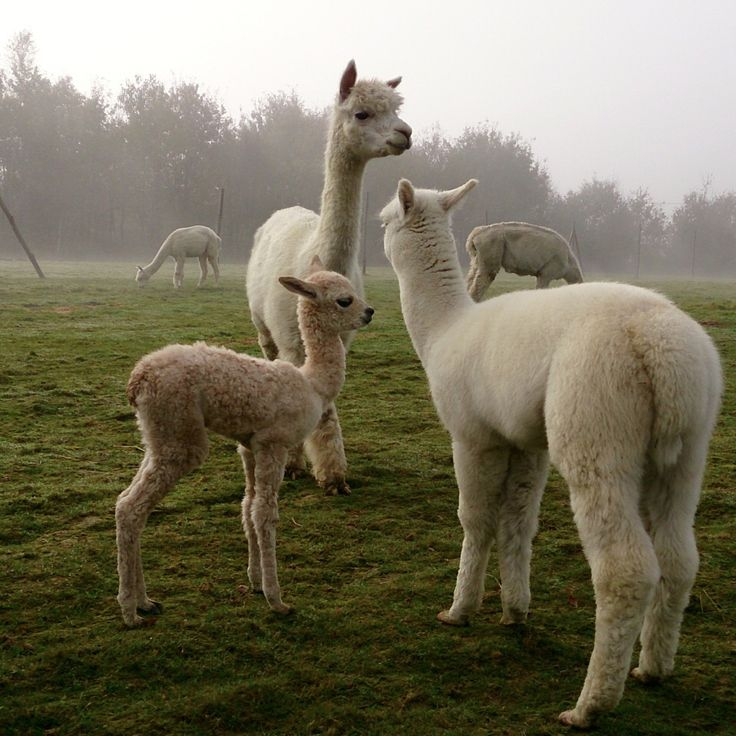 Nowe narodziny na farmie. Jeszcze bez imienia...