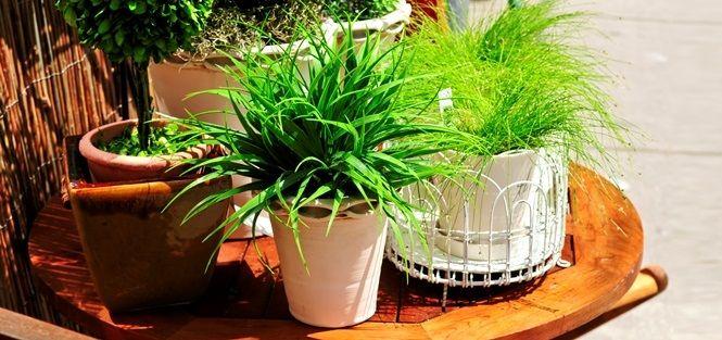 Dicas para montar o seu jardim de inverno simples em ambientes pequenos ou amplos. Saiba quais são as plantas indicadas e muito mais!