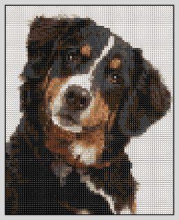 bernesemountaindogcrosstitch   Free Bernese Mountain Dog Cross Stitch Pattern
