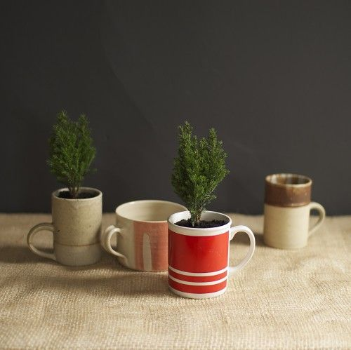 Cypress planted mugs—sweet little gift idea! I also have in mind using mugs for a future windowsill herb garden (since I'm likely to have spares!)