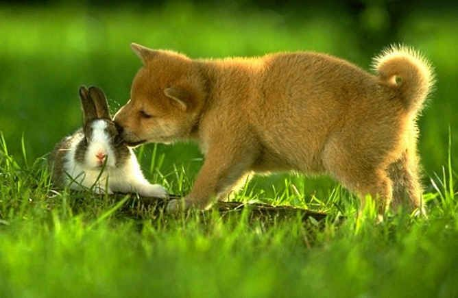 dog and bunny: Kiss, Cat Wallpapers, Animal Pictures, Shiba Inu, Funny Animal Pics, Easter Bunnies, Photos Art, Love Quotes, The Secret