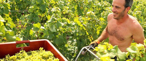 Le vrai (et le faux) des conséquences du réchauffement climatique sur la vigne et les vins