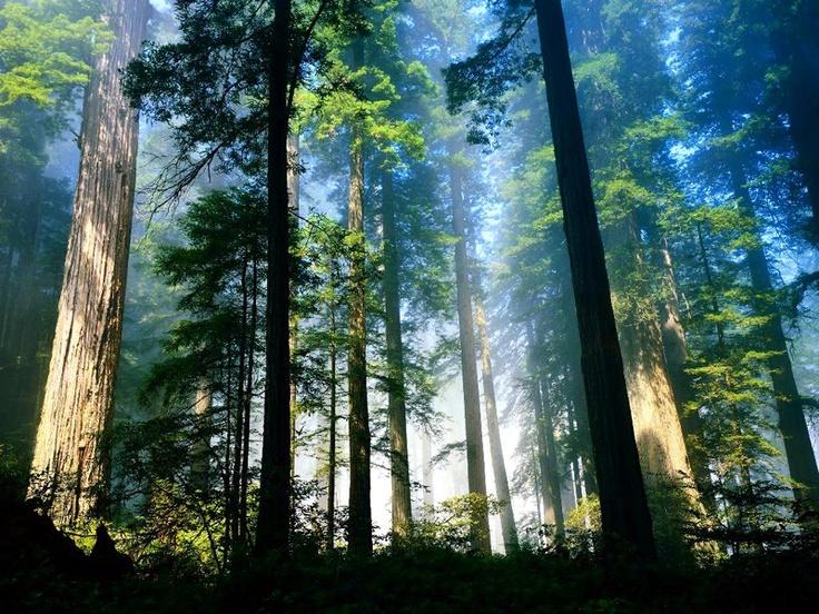 rain forest....trees