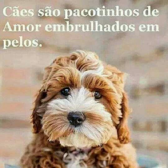 Cães são pacotinhos de amor embrulhados em pelos.