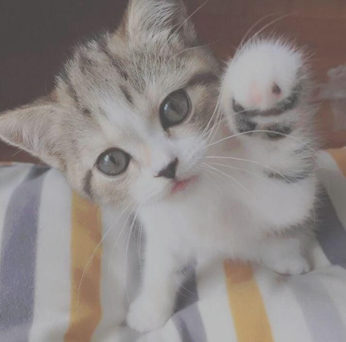 إحنا في 1 مارس وهذا الجميل أصبح يفهم حاجات كثيرة تربية القطط I Love Cats Cats Animals