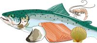 Nutrition Information for Raw Fruits, Vegetables, and Fish