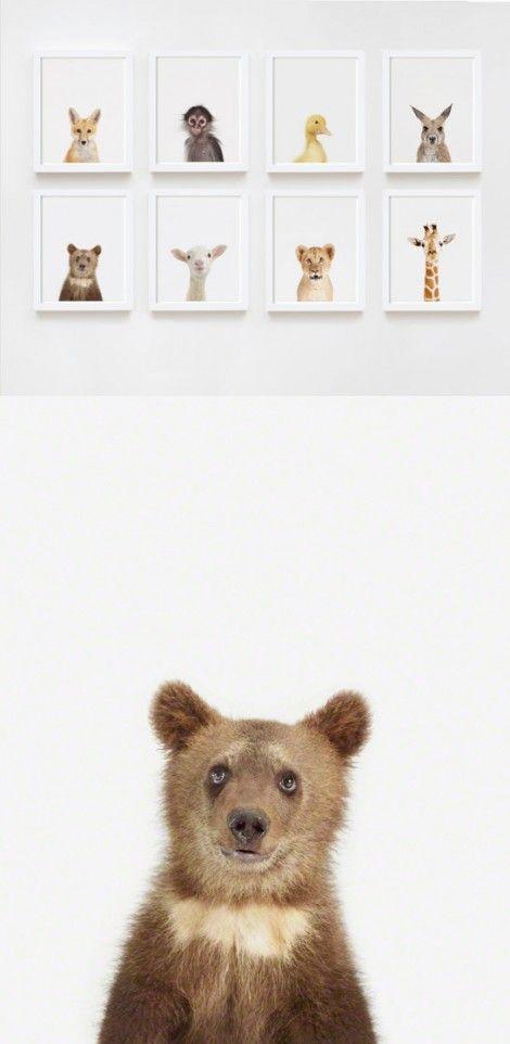 Söta små djur / Cute animal photos/prints for your kid (or yourself...)