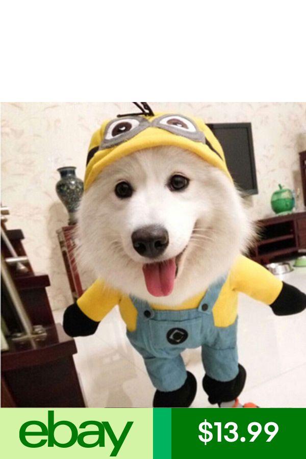 Wish Cute Fancy Pet Cat Dog Puppy Pirate Apparel Costume Clothes