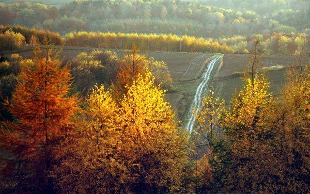 Roztocze region, Poland. Author: Wiesław Lipiec.
