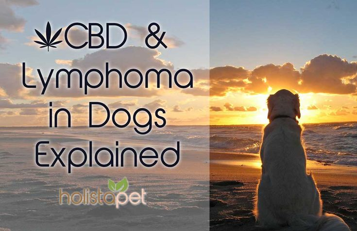 #CBDfordogs helps manage the symptoms of cancer and helps manage the side effects of chemotherapy. Read why you should use #CBD for #Lymphoma #Cancer in dogs