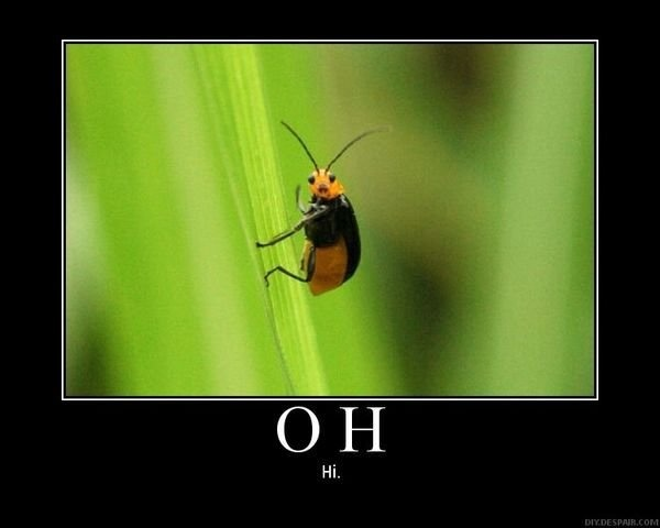 Oh Hi | The Funny Pics Page