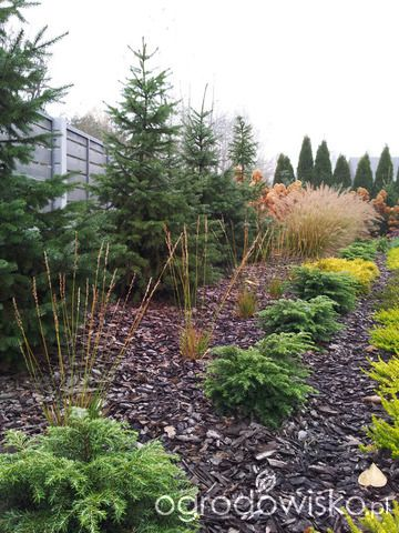 Moja codzienność - ogród Oli - strona 1088 - Forum ogrodnicze - Ogrodowisko