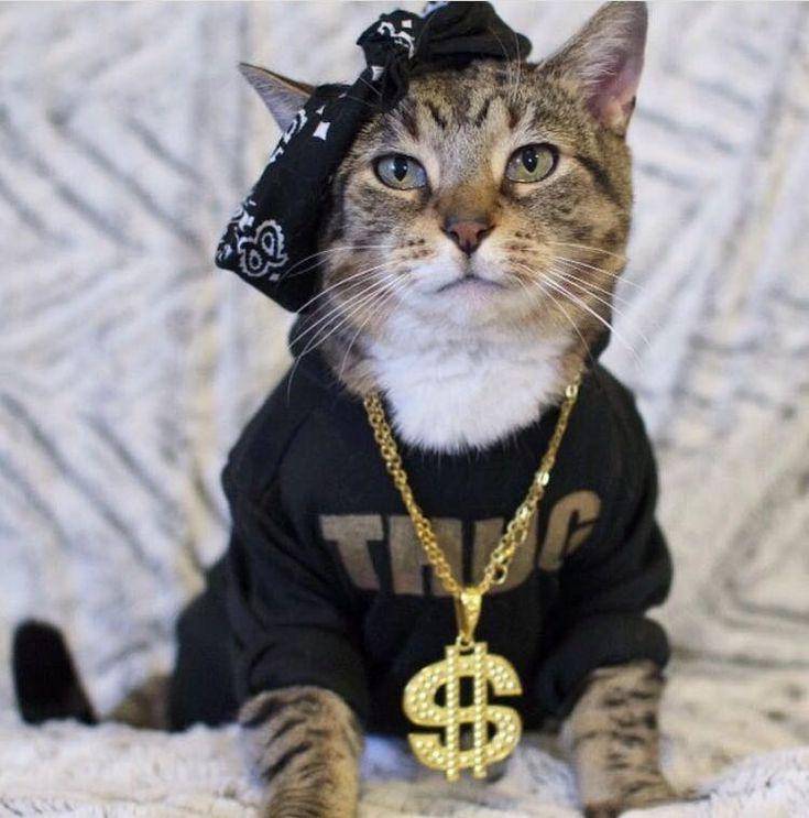 Thug life - http://cutecatshq.com/cats/thug-life-2/