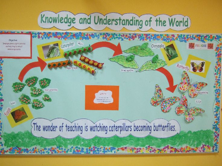 Life Cycle of a Butterfly classroom display photo - SparkleBox