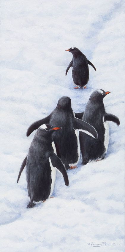 Penguins by Jeremy Paul