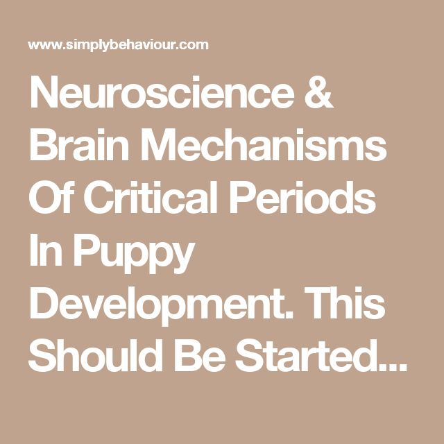 Neuroscience & Brain Mechanisms Of Critical Periods In Puppy Development. This Should Be Started Before You Get Him Home. - Simply Behaviour Dog Training Courses