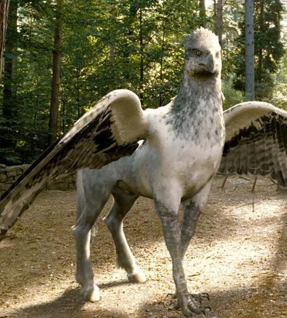 Hippogriff~a horse bird with the head of an eagle and body of a horse I believe. You may bow to it and if bowed to back,you may proceed to touch it. Do not treat them with disrespect or you will end up paying for it. Proof of that is in Harry Potted and the Prisoner of Azkaban,or if you bothered to Fantastic Beasts and Where to Find Them. 15 points to Ravenclaw!