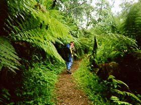 Bushwalk through Main Range National Park
