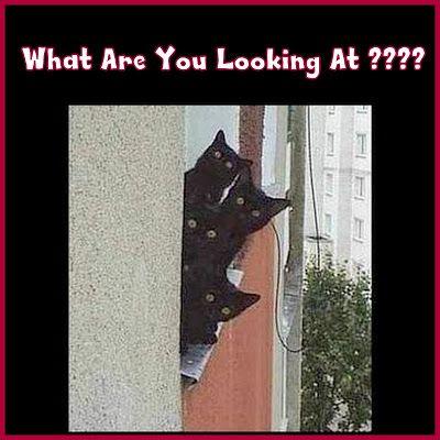 Frigging Nosy Neighbors !!!!