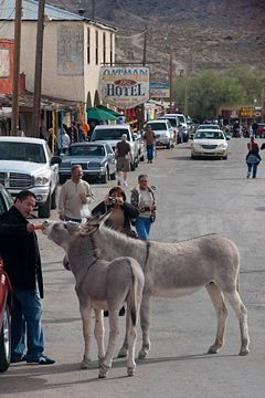 *ARIZONA~Oatman is a old mining town on Route 66 in Western Arizona.It's about equal parts touristy kitsch+real,honest-to-goodnessWild West atmosphere.Gold was discovered in the nearby hills in the early 1900's+the town was home to a boom that lasted til the mines closed in the1930's.The current population of 150 is down from about 23,000 in its boom years.The main st.,lined w/gift shops,looks like a set from a Hollywood Western+w/good reason: Hollywood