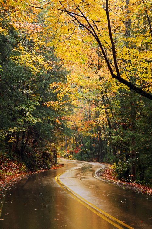 autumn leaves, twisty road, journey, signal mountain fall | tennessee (virginia bailey photography)
