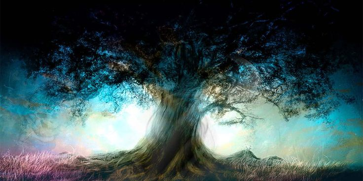 "Doğa Ana'ya Büyük Katkılar Sunan Ağaç: ""Kiri"" - http://www.aylakkarga.com/doga-anaya-buyuk-katkilar-sunan-agac-kiri/"